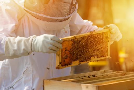 Corso di tecniche di produzione e lavorazione del miele
