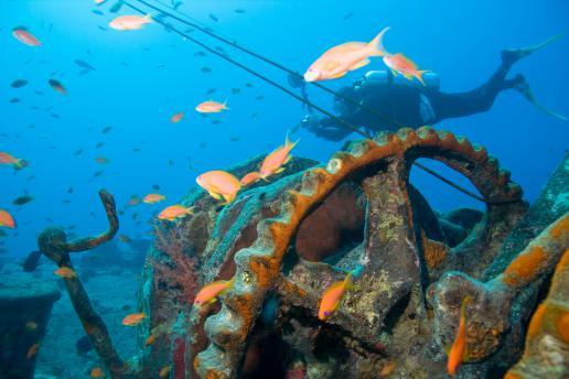 Laurea in biologia marina